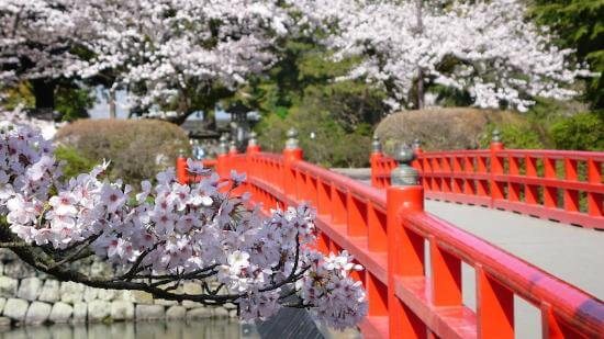 Odawara Castle Park and Museum - youcojapan